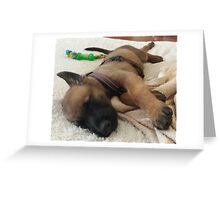 Belgian Malinois Puppy Greeting Card