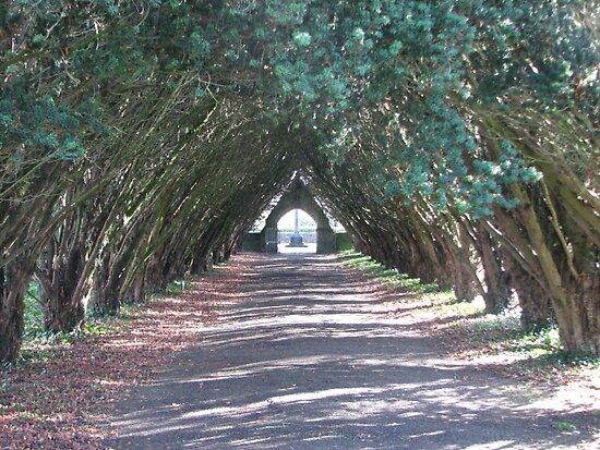 Pathway by Sharon Brady