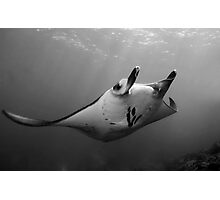 Manta Pose B&W Photographic Print