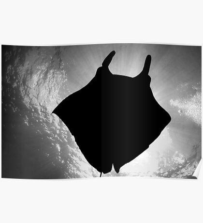 Manta Silhouette B&W Poster