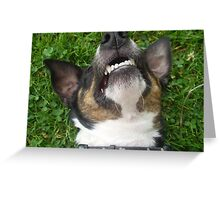 Special Fox Terrier Smooth Coat Greeting Card