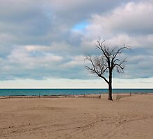 A tree by the lake. by Dipali S