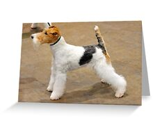 Furry Fox Terrier Smooth Coat Greeting Card