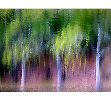 Spring Rain... Photographic Print
