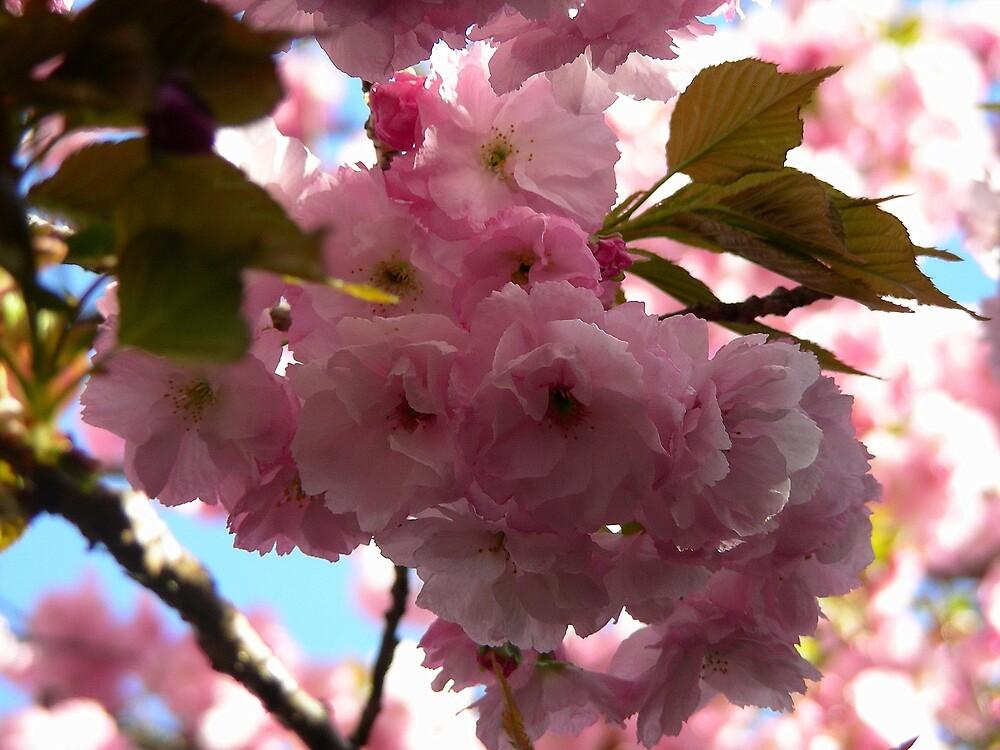 Anuncio de Primavera. by cieloverde