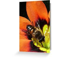 Busy  Busy Greeting Card