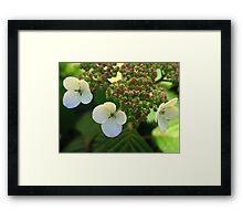 Delicate White Petals Framed Print