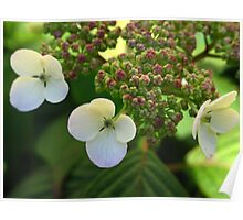 Delicate White Petals Poster