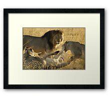 Cat Fight Framed Print