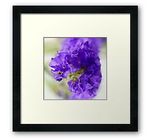 Dreamy blue flowers. Framed Print