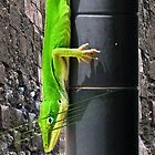 Green.Lizard by MartyMalliton