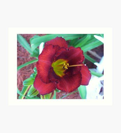 Lillies ! Art Print