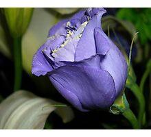Blueish-Purple Photographic Print