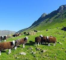 The Lake District: Herdwick Sheep & The Langdales. by Rob Parsons