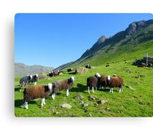 The Lake District: Herdwick Sheep & The Langdales. Canvas Print