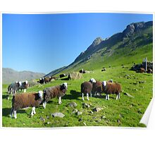 The Lake District: Herdwick Sheep & The Langdales. Poster