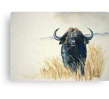 Buffalo in the Veld Canvas Print