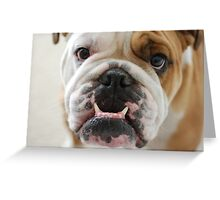 Furry Bulldogs Greeting Card