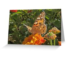"Vanessa  Cardui (or Cynthia Cardui or ""Belle-Dame"" or ""bella-Dama"" or Painted Lady) Butterfly Greeting Card"