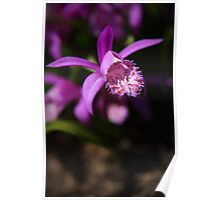 Chinese orchid Poster