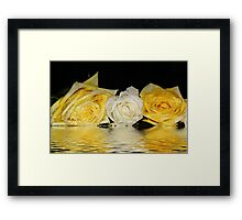 Roses white and yellow. Framed Print