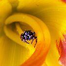 To Live in a Lily... by Jennifer Potter