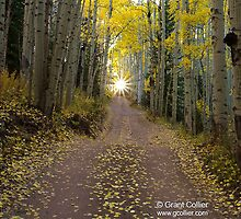 Aspen Trees by Road in Colorado by Intern2
