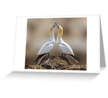 Dance of the Gannets Greeting Card