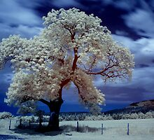 Tree (IR) #3 by PaulBradley