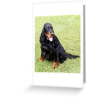 Beautiful Gordon Setter Greeting Card