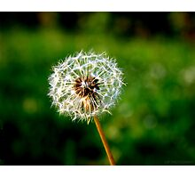 If you had one wish, what would it be? Photographic Print