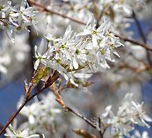 White blossoms by vigor