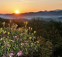 sunrise with laurel by dc witmer