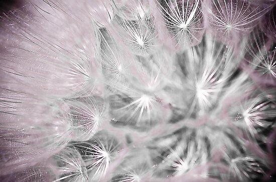 tiny pink stars by Jen Wahl