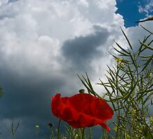 The Poppy and the Cloud by Nigel Bangert