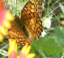 Butterfly and Blooms by Navigator