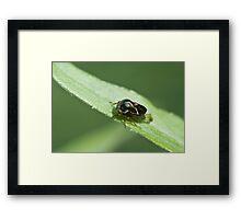 leaf hopper Framed Print