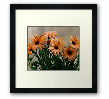 Pale orange flowers Framed Print
