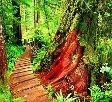 Pacific Rim National Park by TJ Kerr