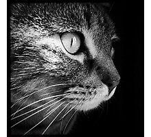 Tasha  Photographic Print