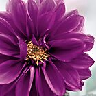 the color purple. by Kyle Carlos
