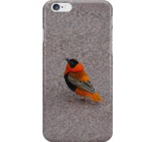 African Bird Case iPhone Case/Skin