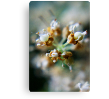 After bloom... (from wild flowers collection) Canvas Print