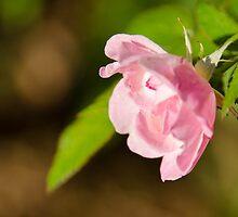 Floral 2 by andreaanderegg