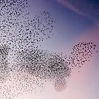 Starling Cloud by David Clarke