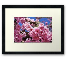 Spring Tree Blossoms Art Prints Gifts Framed Print