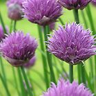 chives by catherine bracegirdle