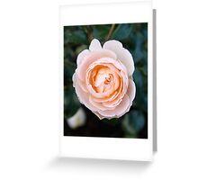 peach face Greeting Card
