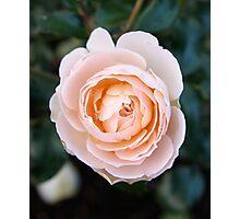 peach face Photographic Print