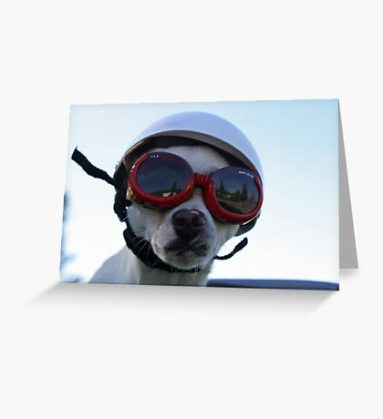 Chihuahua and the Bike Safety Message Greeting Card